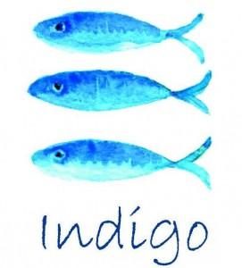 indigo536324_428672727147812_1959372501_n