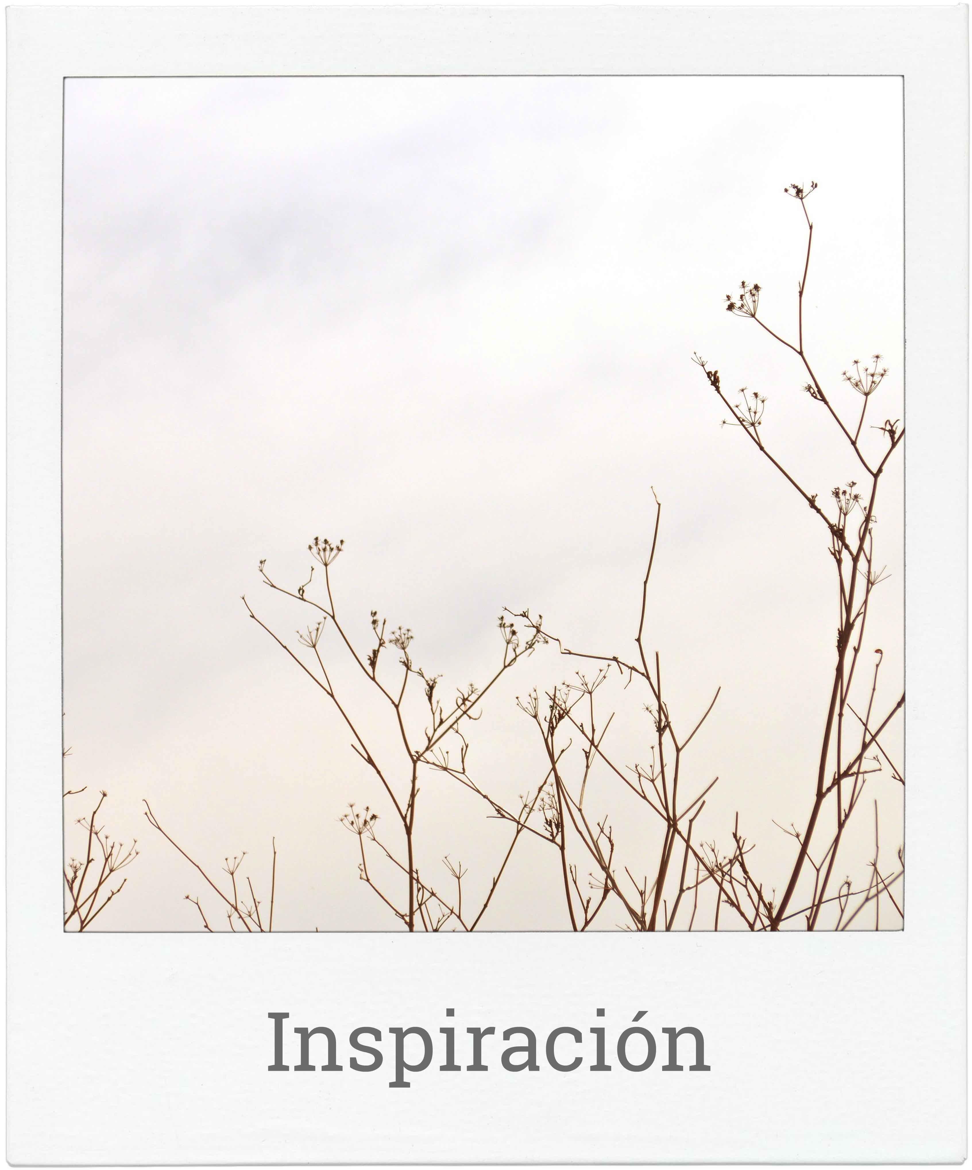 Joyas de plata inspiradas en naturaleza